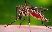 Zika_Aedes_aegypti_mos_3553076b