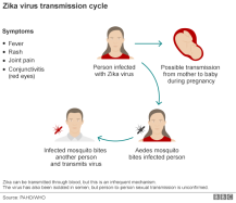 zika_virus_cycle_624-08 Source WHO PAHO